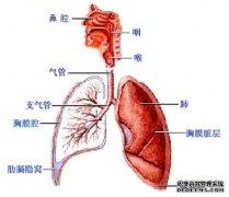 呼吸系统人体解剖学医学视频.RM