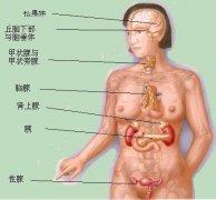 解剖学专业资料全集下载、解剖学视频下载