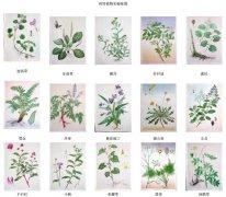 药用植物实验挂图_信阳农专