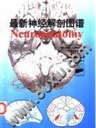 最新神经解剖图谱_(美) 杜安・E・海恩斯著 鲍圣德 ... [等] 译.p