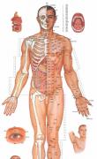 中医男女人体穴位图